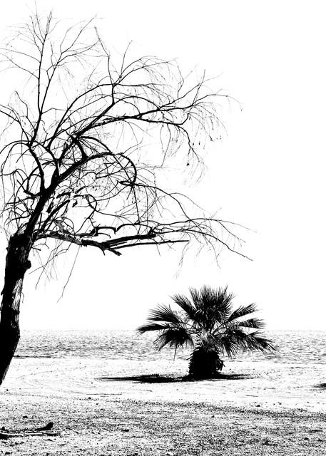Salton Sea Stark Landscape Art | Shaun McGrath Photography