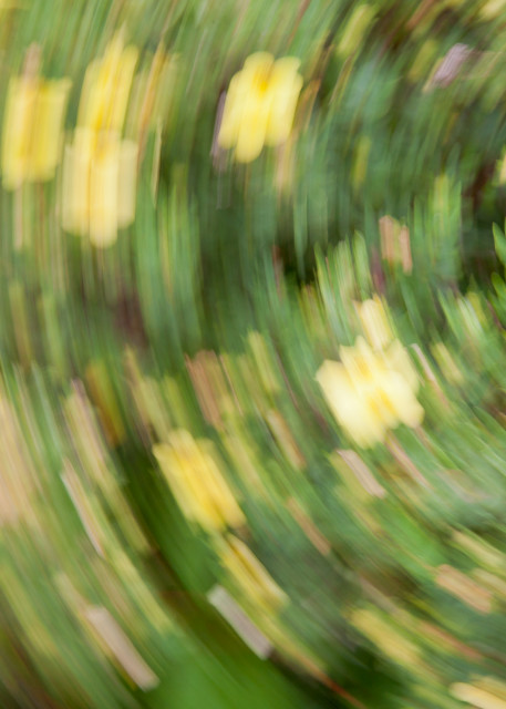 Flowers Rotated Photography Art | Robert Leaper Photography