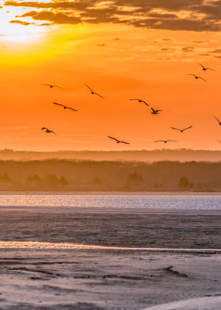 Long Point Seagulls Art   Michael Blanchard Inspirational Photography - Crossroads Gallery