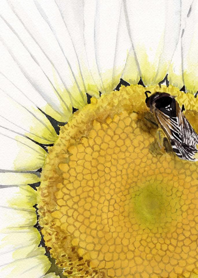 Macro Daisy and Bee