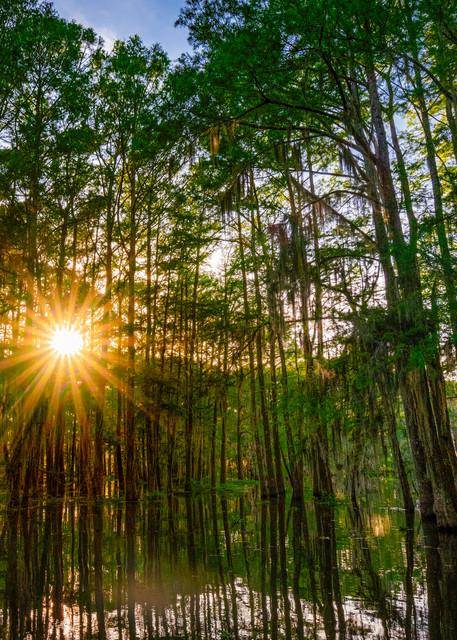 Shining through the swamp - Louisiana fine-art photography prints