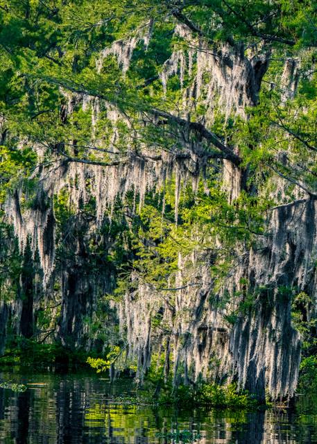 Bayou Scenery - Louisiana swamp fine-art photography prints