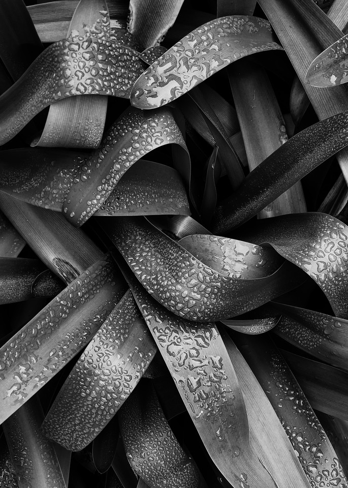 Leaves Black And White Photography Art | David Louis Klein