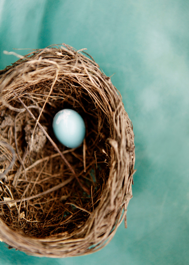 Nest Photography Art | Belathée Fine Arts by Belathée Photography