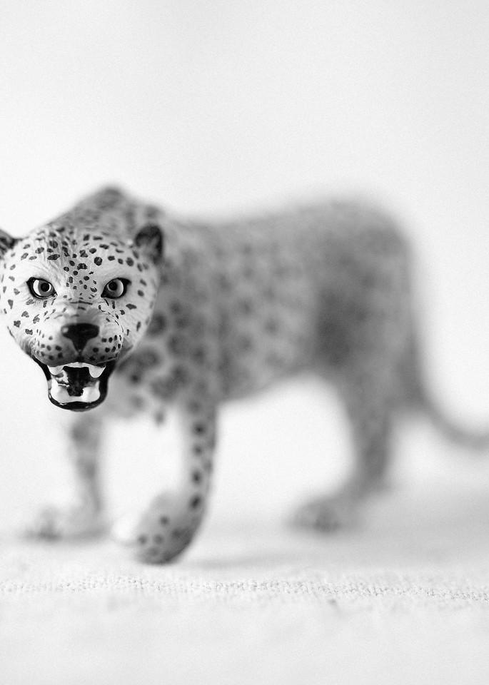 Leopard Photography Art   Roman Coia Photographer