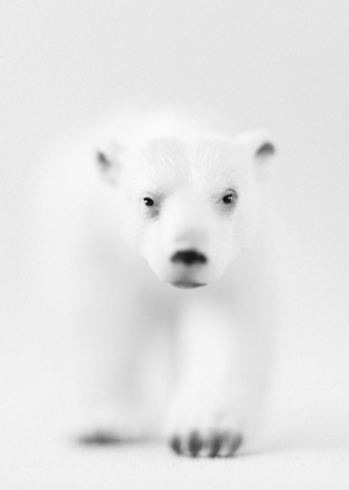 Polar Bear Photography Art | Roman Coia Photographer