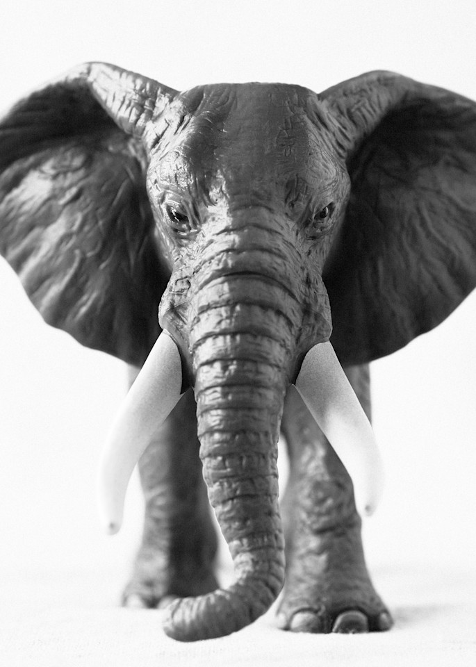 African Elephant (Male) Photography Art | Roman Coia Photographer