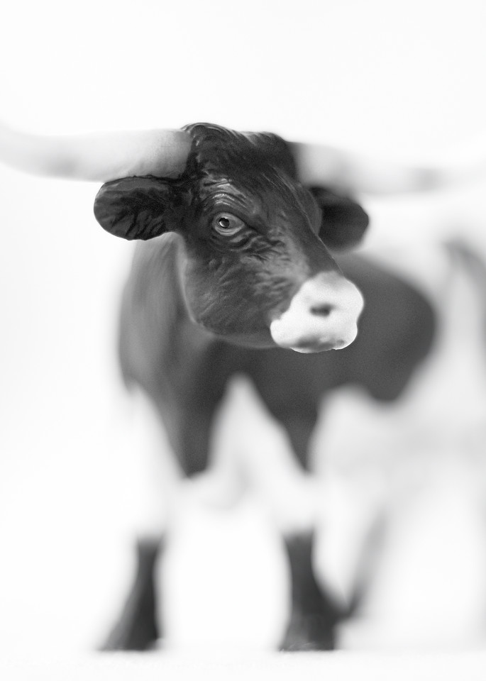 Longhorn Steer Photography Art | Roman Coia Photographer