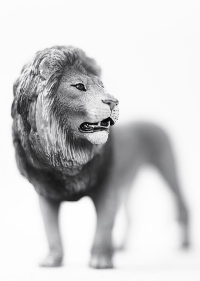 African Lion Photography Art | Roman Coia Photographer