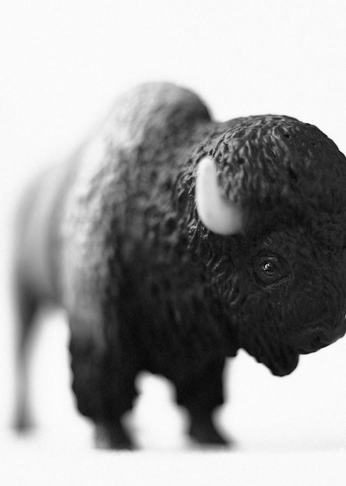 American Buffalo Photography Art | Roman Coia Photographer