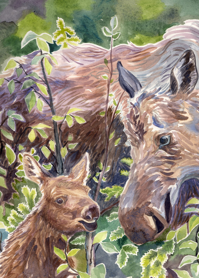 Mama and Baby Moose, Close By in Forest - Alaska art print