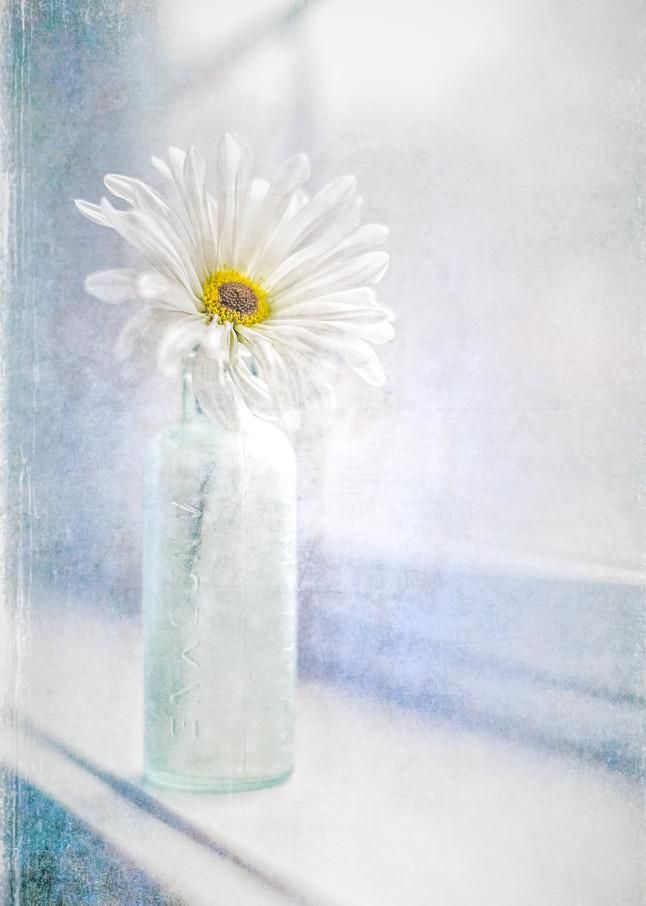 Window lit daisy