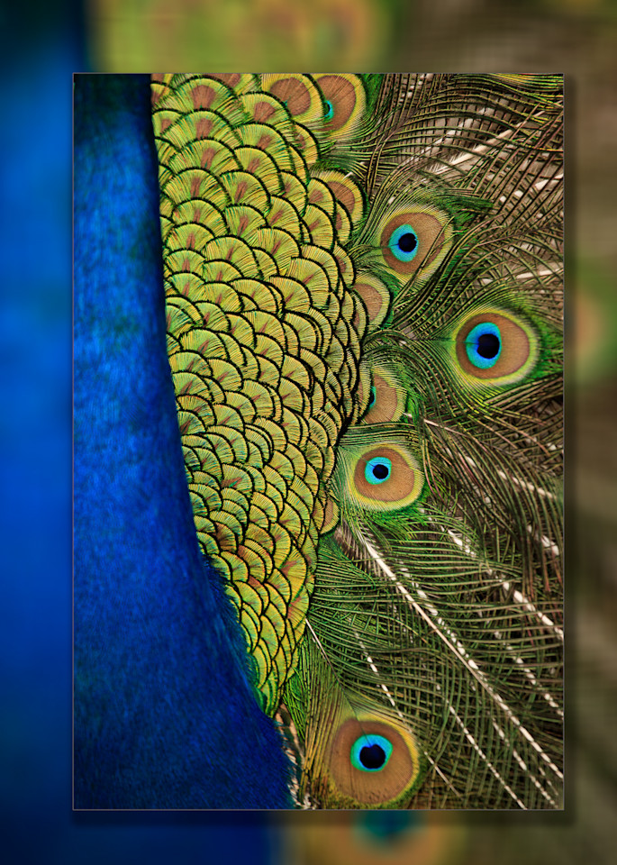 Peacock Abstract 3 D Photography Art | Whispering Impressions