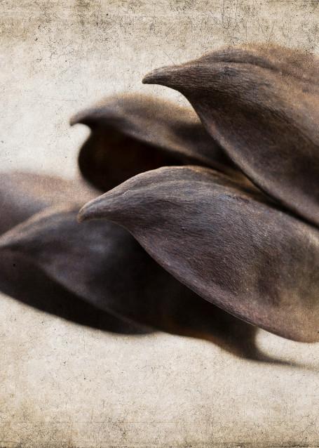 Seed Pods No.2 Photography Art | Doug Landreth Photography