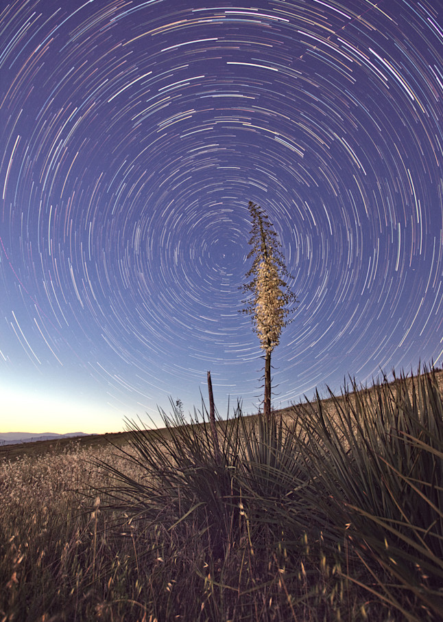 Star Trails Over Yucca Blossom Art | Chad Wanstreet Inc