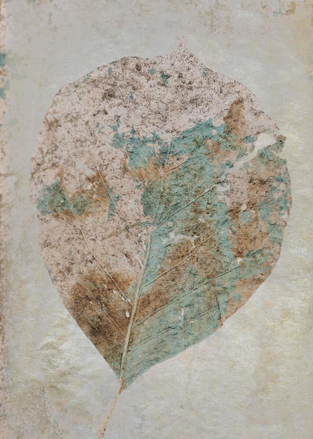 Blended Leaf Photography Art | Doug Landreth Photography