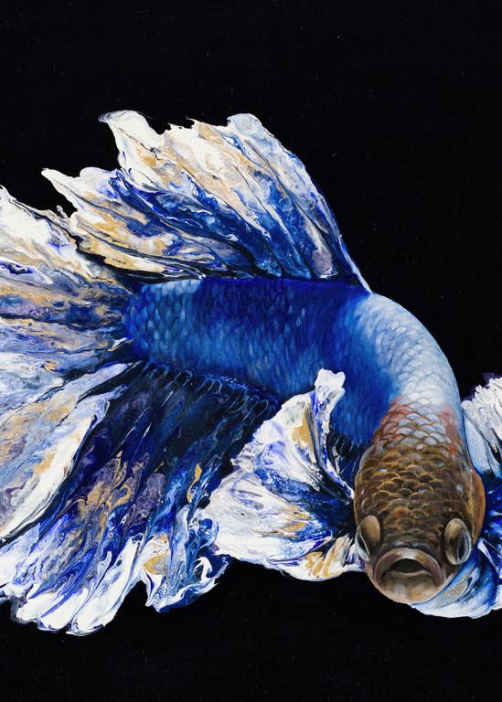 Sapphire Betta Art | MMG Art Studio | Fine Art Colorado Gallery