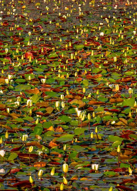 Big Branch kaleidoscope - Louisiana fine-art photography prints
