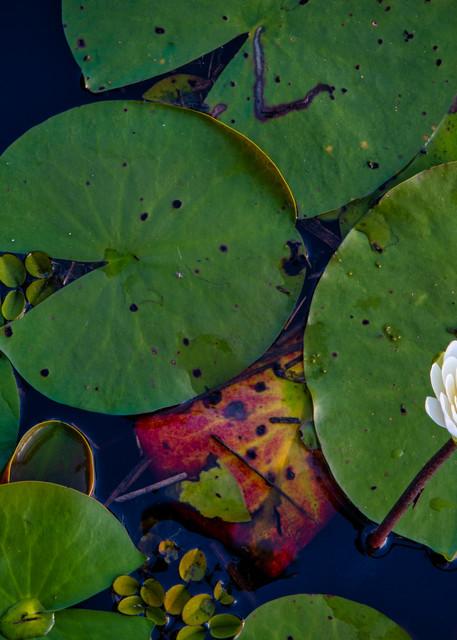 Opening up - Louisiana fine-art photography prints
