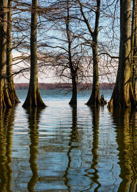 Cypress Trees Reflection 5490   Photography Art | Koral Martin Healthcare Art