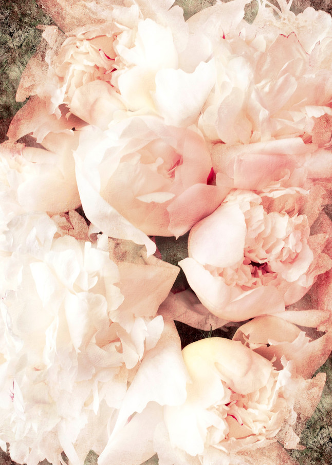 Peonies, by Laura Grisamore