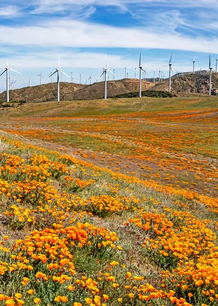 Windy Valley Poppyscape Photography Art | Josh Kimball Photography