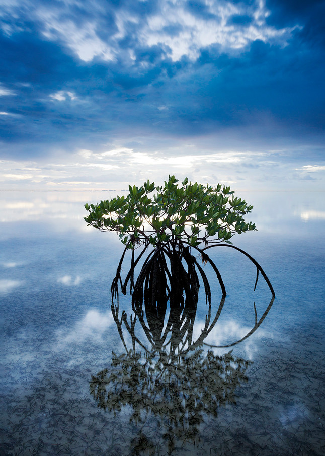 Fine art nature photography of Biscayne Bay by Constance Mier