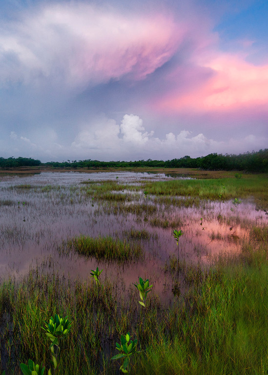 Constance Mier Everglades Photography - stunning images of Florida's wetland prairies