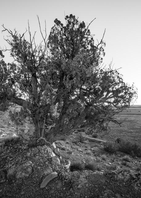 Desert Sunrise Photography Art   Andy Crawford Photography - Fine-art photography