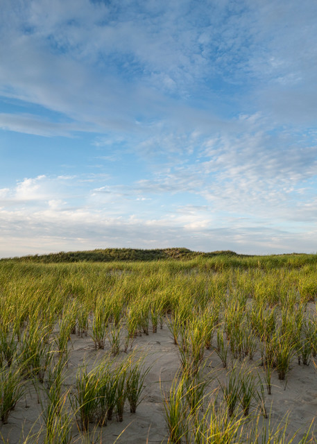 Beach Grass Photography Art | Kit Noble Photography