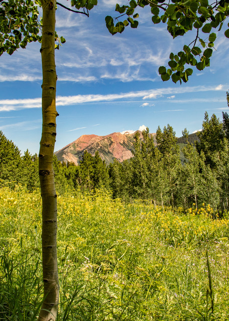 Aspen Mountains  6818 C S19  Photography Art   Koral Martin Healthcare Art