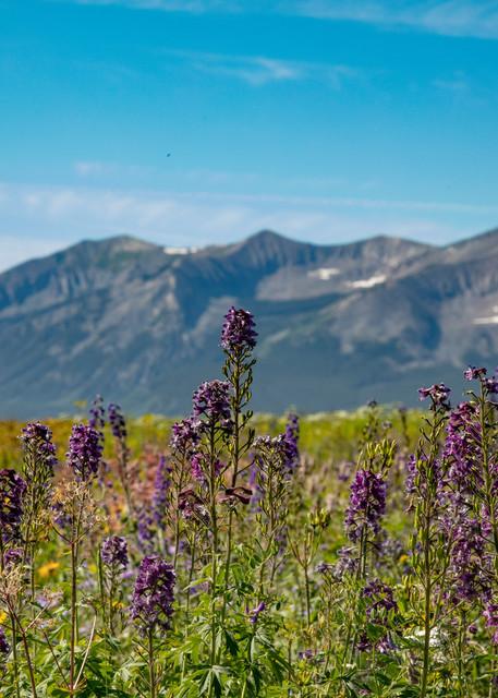 Purple Wildflowers Dre6737   Photography Art   Koral Martin Healthcare Art