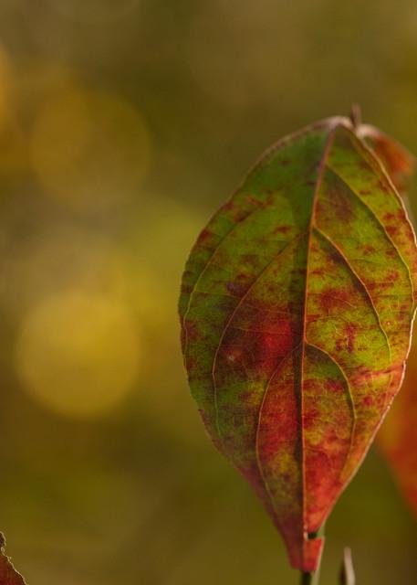 Dogwood Leaf 0705   Photography Art | Koral Martin Healthcare Art