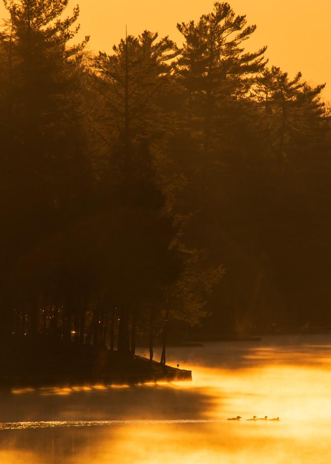 Loons On Golden Pond Photography Art   Kurt Gardner Photogarphy