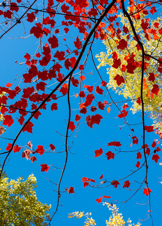 Fall Kaleidoscope I by Jeremy Simonson