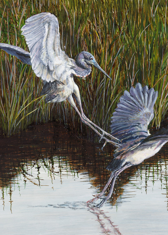 """""""Monday Morning Blues""""   Tricolored Herons Art 