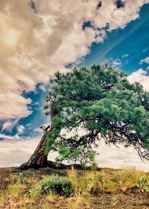Old Lone Tree Art | CJ Harding