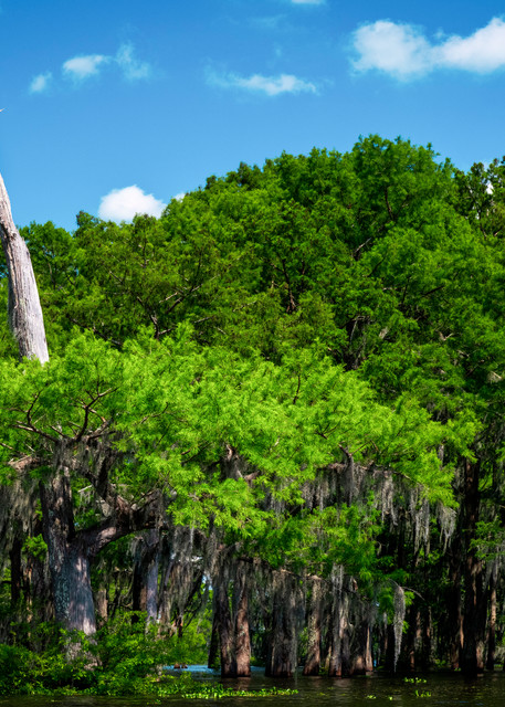 Not Dead Yet - Louisiana swamp fine-art photography prints