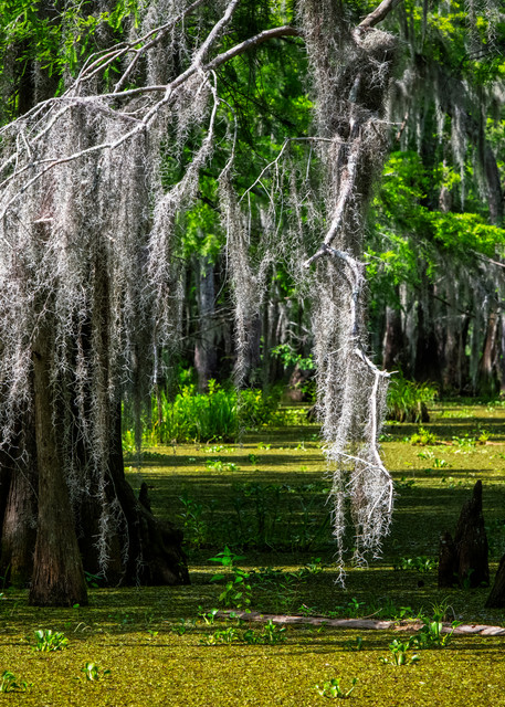 Through the Veil - Louisiana swamp fine-art photography prints
