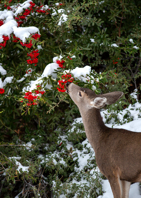 Winter's Delights Photography Art | Josh Kimball Photography