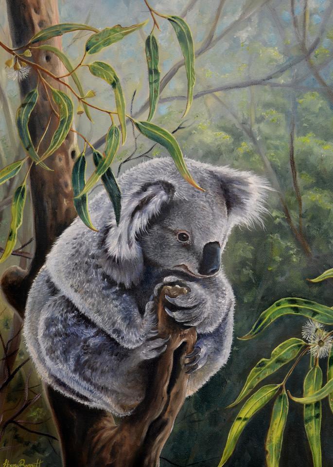 Koala - Amongst the Gumleaves