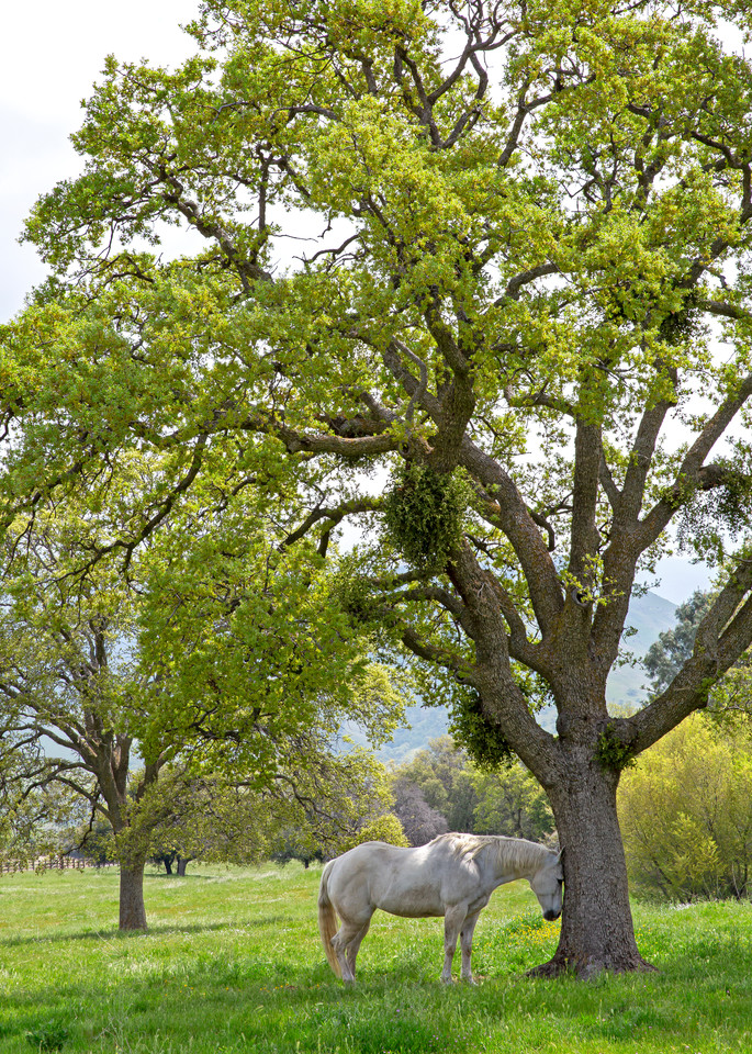 The Idyllic Pasture Photography Art | Josh Kimball Photography