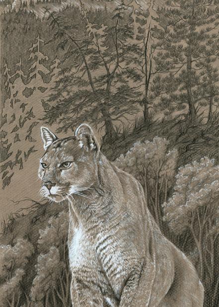 """""""Grounds Keeper"""" a fine art print of a mountain lion by Montana artist Joe Ziolkowski."""