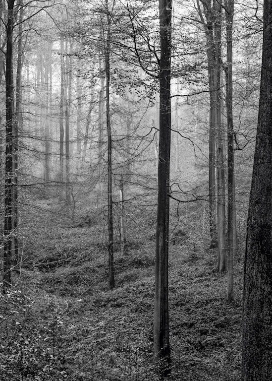 Late Autumn Walk Through the Sonian Forest No. 20, Belgium, 2019