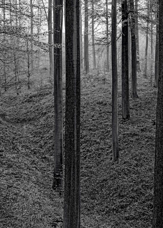 Late Autumn Walk Through the Sonian Forest No. 21, Belgium, 2019