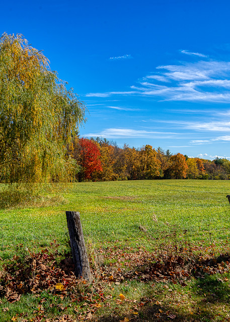 Weeping Willow Photography Art | Paul J Godin Photography
