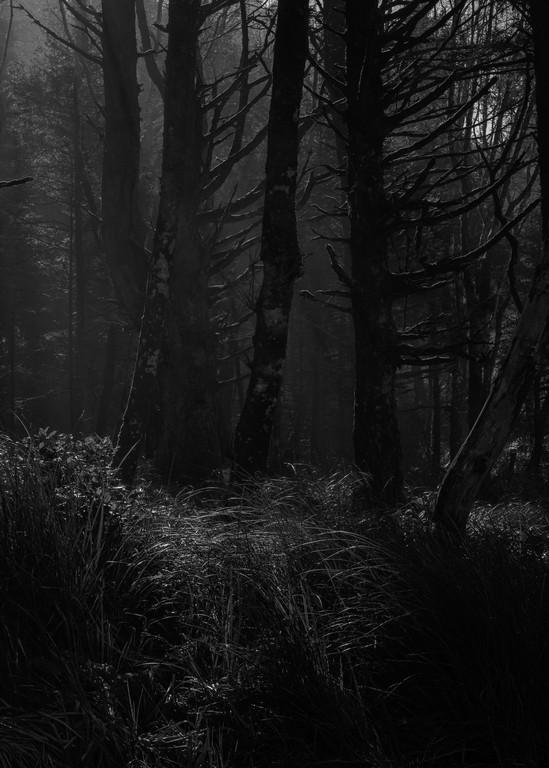 Forest, Hug Point, Oregon, 2020