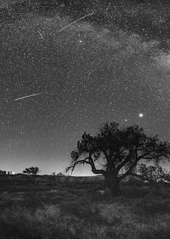 Milky Way Over The Hanging Tree Photography Art | John Gregor Photography