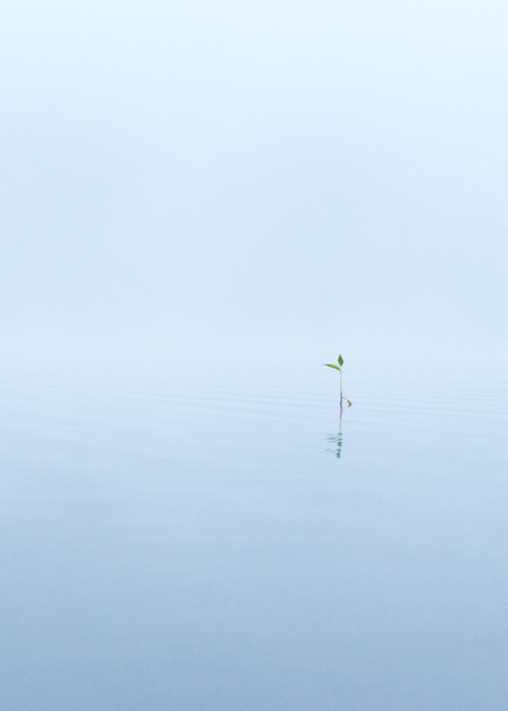 Tranquility - early morning long exposure on water in Northern California photograph print
