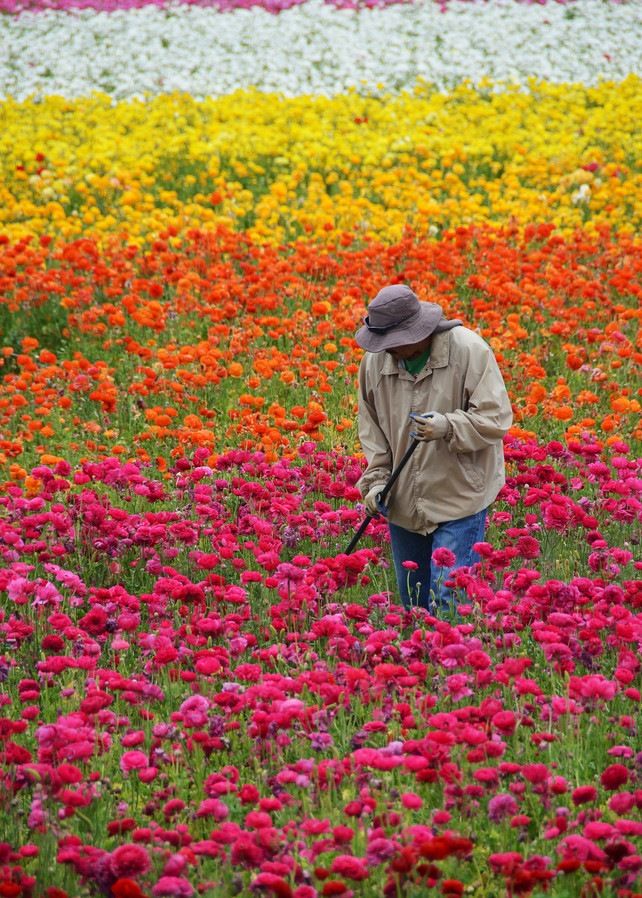 Flower Field Caretaker Photograph – Photography - Fine Art Prints on Canvas, Paper, Metal & More